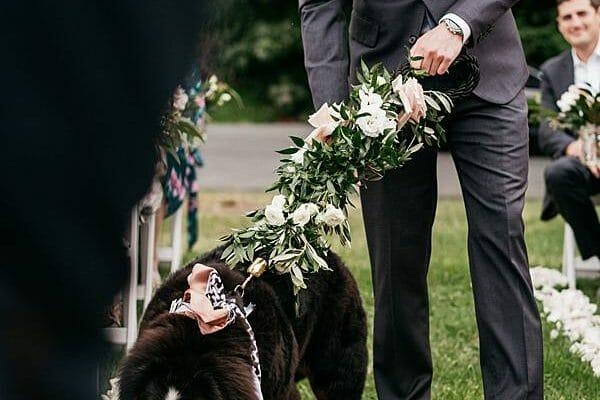 Maleny Manor Wedding - Ceremony Dog walking down Aisle 2
